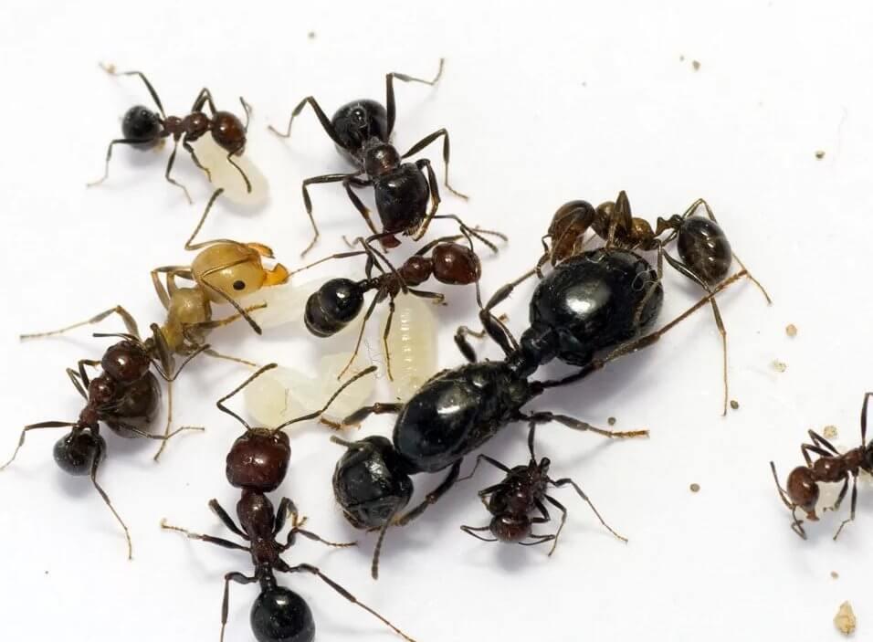 фото муравьи