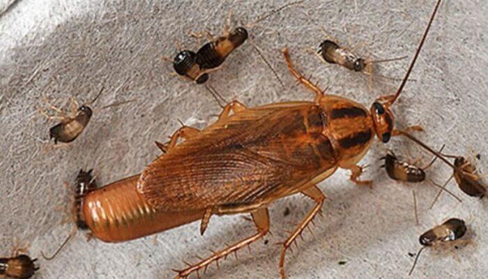 СЭС Челябинск от тараканов